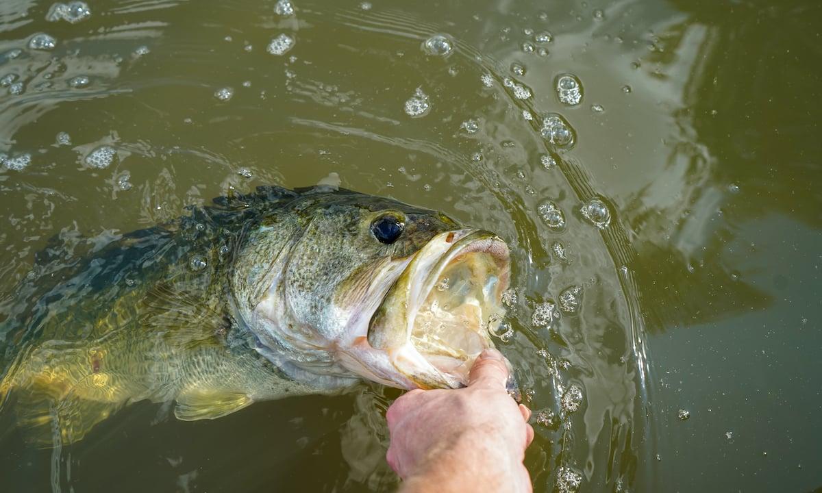 Bass-Release