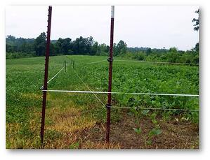 Electric Exclusion Fencing for Deer Food Polts