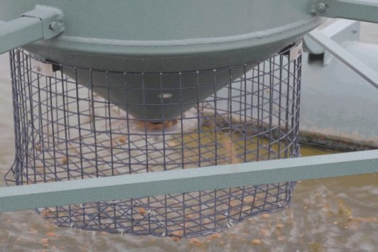 Floating Fish Feeder