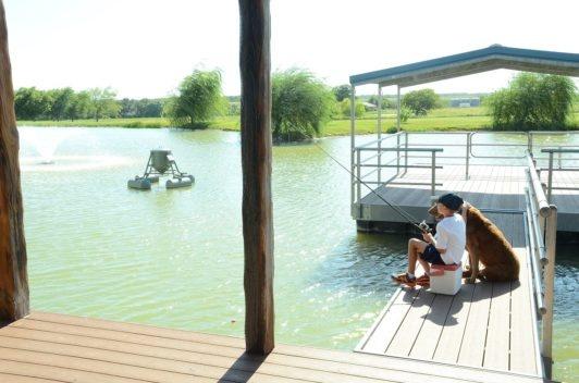 Environmental Friendly Pond Algae Control