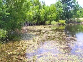 Texas-pond-overrun-with-vegetation