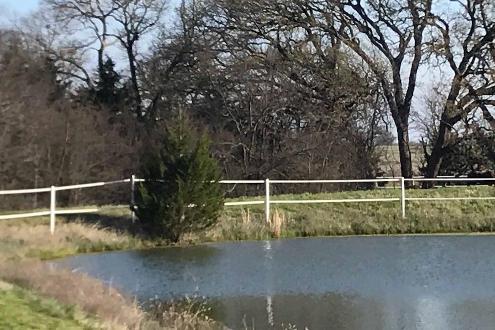 Cedar tree on dam pond