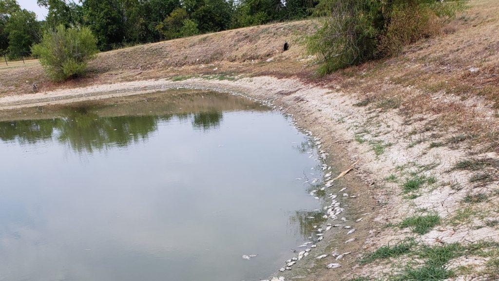 Fish Kill in North Texas