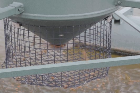 Pelleted Fish Food from Automatic Fish Feeder