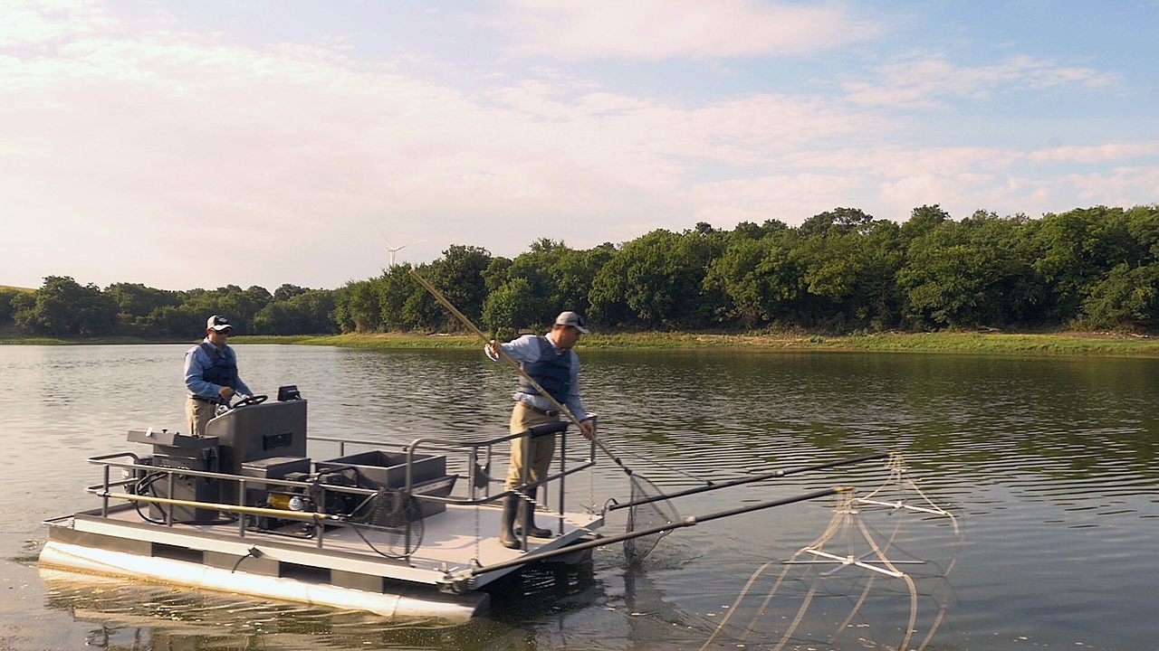 Raising Trophy Bass: 6 Steps to Big Bass Pond Management