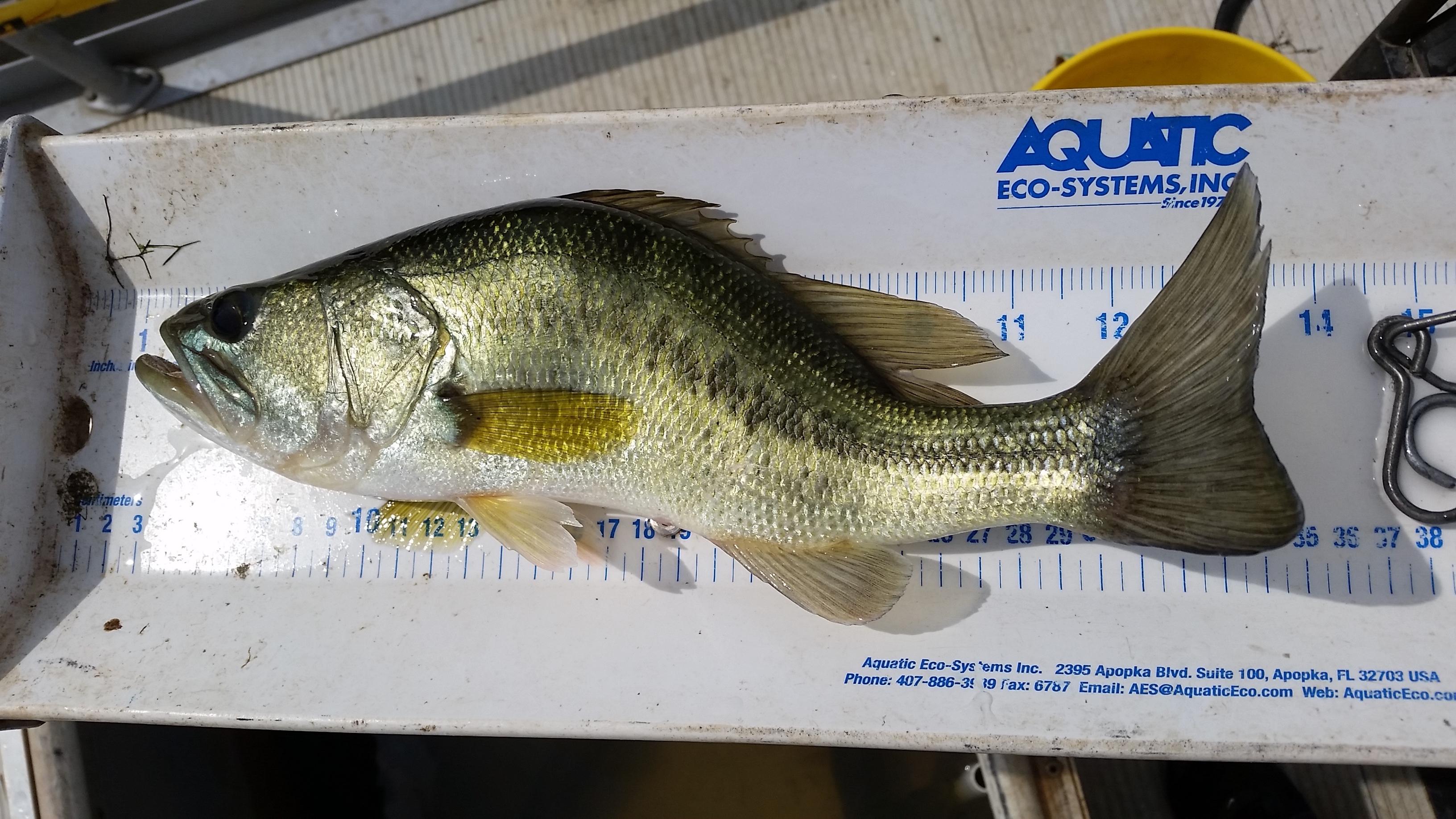 Under-weight bass on bump board